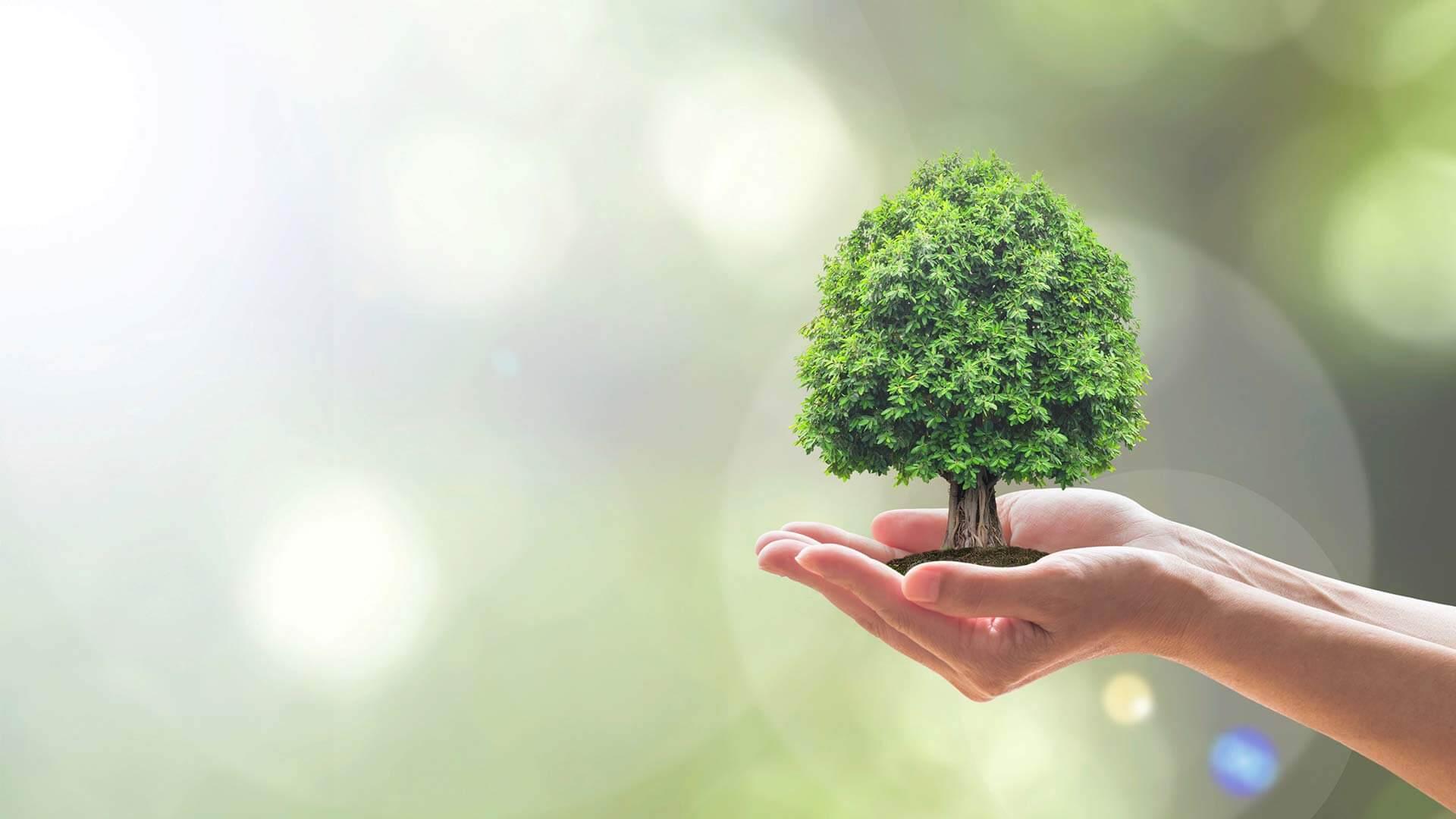 Umwelt Verantwortung nachhaltige Produkte und Umweltgesetze